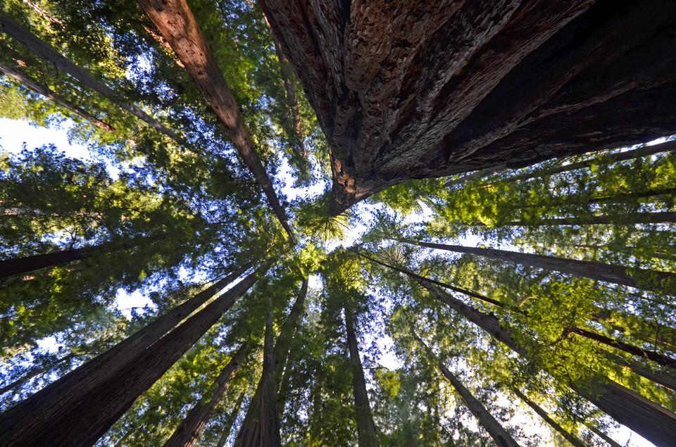 """让家住进一位自然的""""树""""精灵"""
