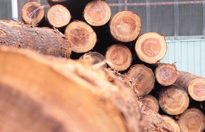 全面聚焦实木地暖地板
