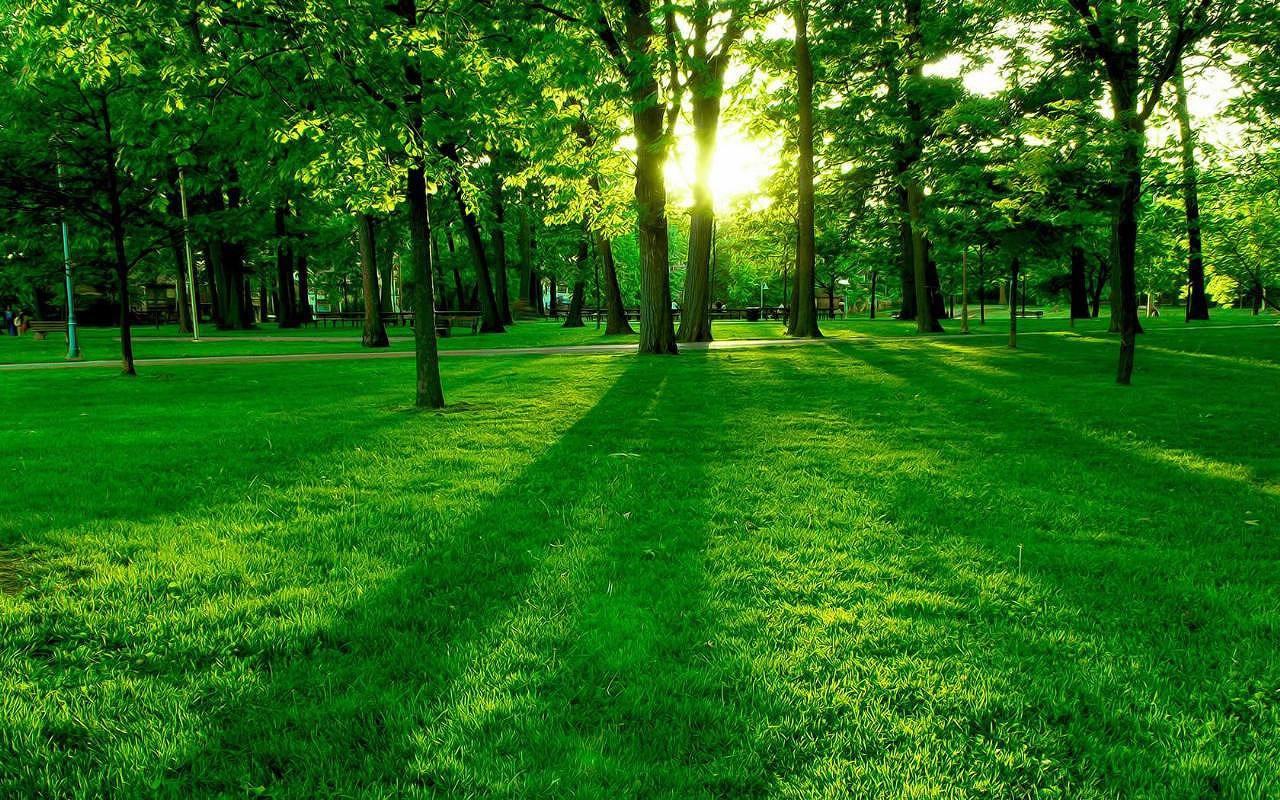 森林有一颗树钢琴谱